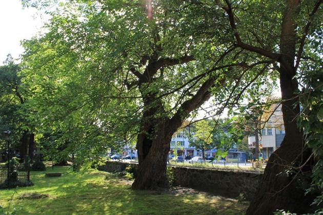 Die Maulbeerbäume: Es musste etwas geschehen…